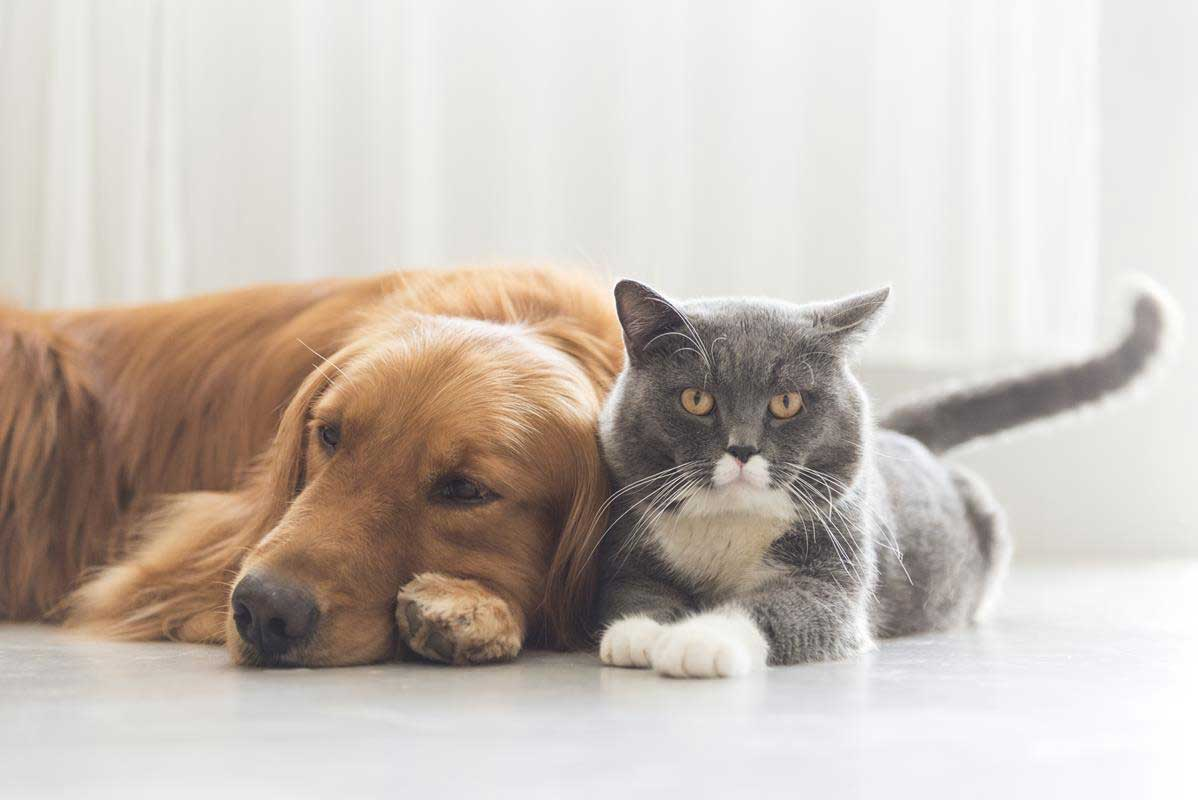 about our veterinary practice  Cypress, CA